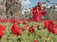 פסטיבל דרום אדום נגב / צלם: אורלי גנוסר